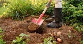 2021 ACE FL Grow Your Own Vegetables Alexandra
